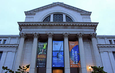 Photograph - Looking Up At The National Museum Of Natural History by Cora Wandel