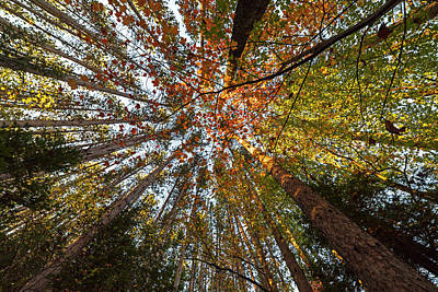 Photograph - Looking Up At The Trees Adirondack Log Keene Valley Ny New York by Toby McGuire