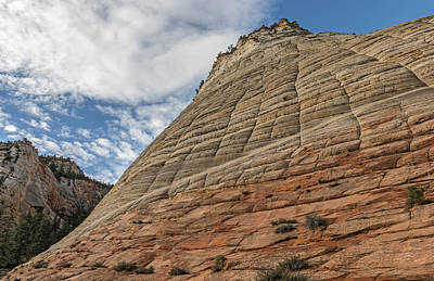 Photograph - Looking Up Checkerboard Mesa by Loree Johnson