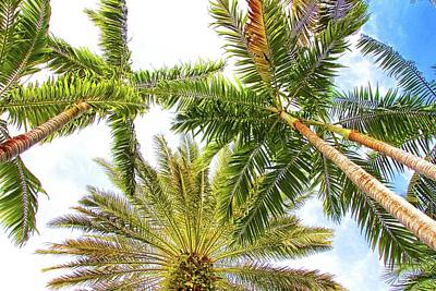 Photograph - Looking Up In Key West by Alice Gipson