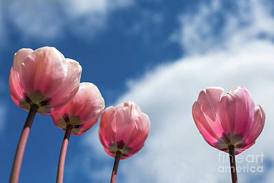 Photograph - Looking Up by Karin Pinkham