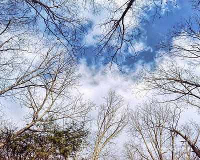 Photograph - Looking Up by Kerri Farley