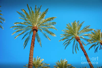 Photograph - Looking Up Palm Trees And Sky  by David Zanzinger
