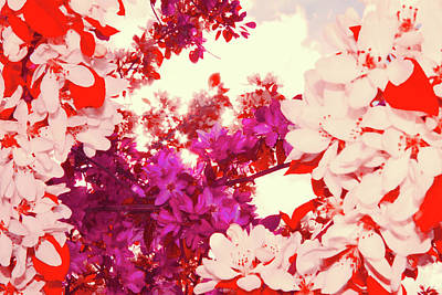 Photograph - Looking Up Reds by Donna L Munro