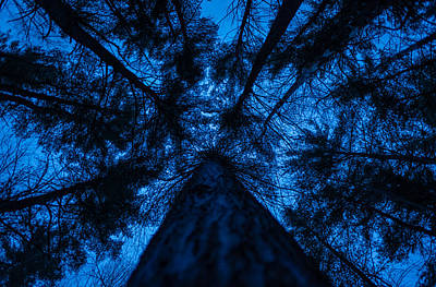 Photograph - Looking Up by Robert McKayJones
