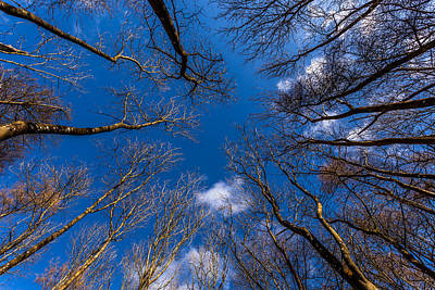 Photograph - Looking Up by Stuart Gennery