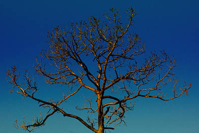Photograph - Looking Up, Sunrise, Myakka State Forest by John Myers