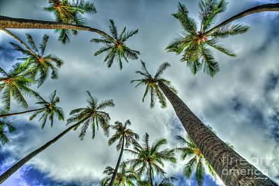 Photograph - Looking Up The Hawaiian Palm Tree Hawaii Collection Art by Reid Callaway