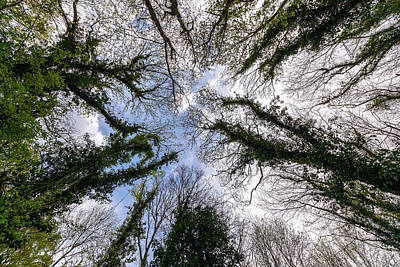 Photograph - Looking Up Through Trees Tops A by Jacek Wojnarowski