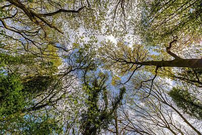 Photograph - Looking Up Through Trees Tops B by Jacek Wojnarowski