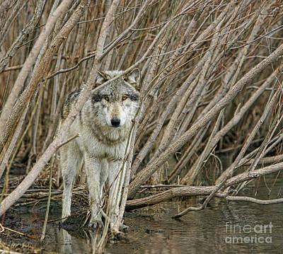 Photograph - Looking Wild 3 by Shari Jardina