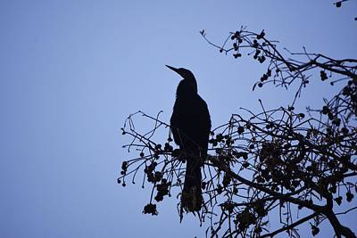 Photograph - Lookout Bird In The Tree by Jo Jurkiewicz