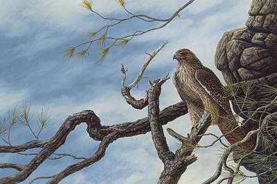 Red Tail Hawk Painting - Lookout by Dave Hills