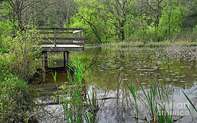 Photograph - Lookout Deck In Wildlife Sanctuary by Charline Xia