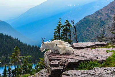 Mountain Goat Photograph - Lookout Ledge by Joseph Rossbach