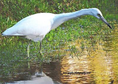 Photograph - Looming At The Lowcountry Lagoon by Tami Quigley