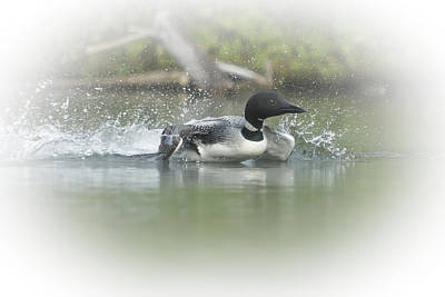 Photograph - Loon 6 by Vance Bell