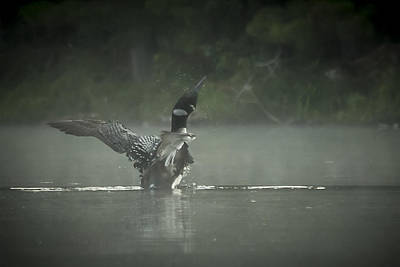 Photograph - Loon 7 by Vance Bell