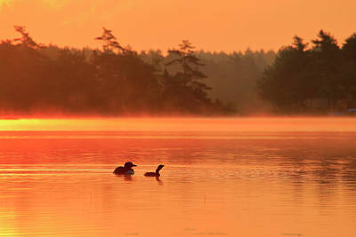 Photograph - Loon And Chick At Sunrise by Gary Corbett