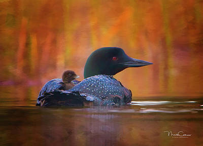 Loon Digital Art - Loon And Chick by Monte Comeau