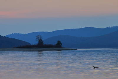Photograph - Loon At Quabbin Reservoir by John Burk
