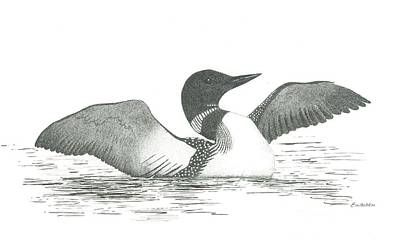 Loon Drawing - Loon by Ed Einboden