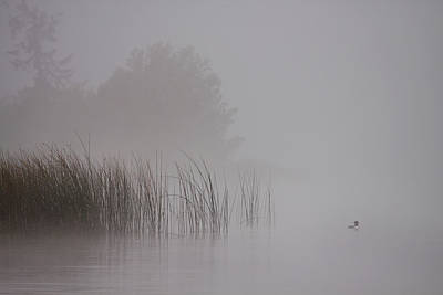 Loon Wall Art - Photograph - Loon In Morning Fog by Naman Imagery