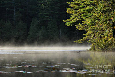 Loon On Rocky Pond, Baxter State Park Art Print