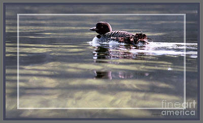 Photograph - Loon On Sand Pond, Framed by Sandra Huston