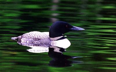 Loon On The Lake Art Print by Rick Frost