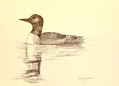 Loon Drawing - Loon by Terry Honstead