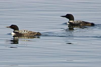 Lake Superior Photograph - Loons On Lake Superior by Hella Buchheim