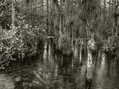 Photograph - Loop Road Swamp #1 by Michael Kirk