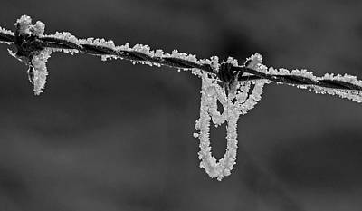 Photograph - Looped Frost by Inge Riis McDonald