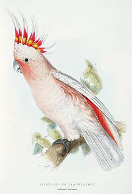 Parakeet Mixed Media - Plyctolophus Leadbeateri Leadbeaters Cockatoo by Edward Lear