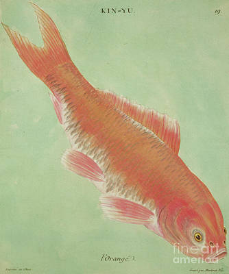 Angle Fish Painting - L'orange by Chinese School