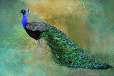 Photograph - Lord Peacock by HH Photography of Florida