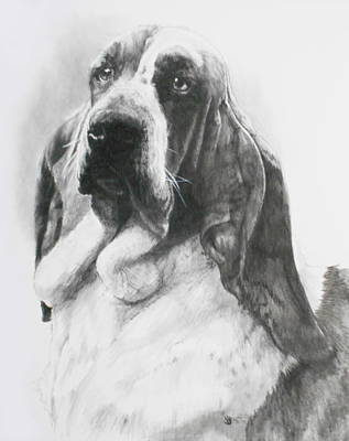 Basset Drawing - Lordly by Barbara Keith