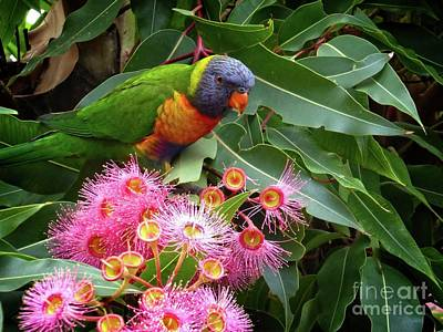 Photograph - Lorikeet by Fran Woods