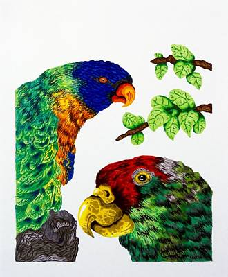 Drawing - Lorikeets by Gabriel Cajina