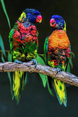 Rainbow Photograph - Lorikeets by Marcia Colelli