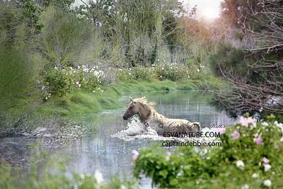 Photograph - Lorna Dune In Glade Surrounded By Rosemallow by Captain Debbie Ritter