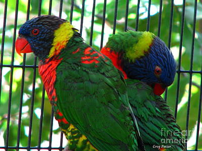 Lory Art Print by Greg Patzer