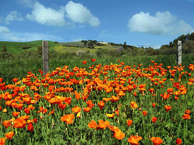 Wine Country Photograph - Los Olivos Poppies by Kurt Van Wagner