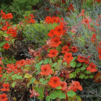 Photograph - Los Osos Wildflowers by Methune Hively