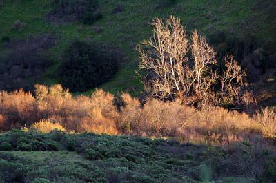 Photograph - Los Penasquitos Canyon Preserve I by Robin Street-Morris