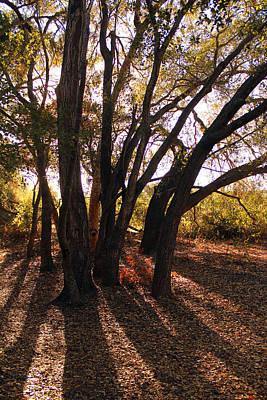 Photograph - Los Penasquitos Canyon Preserve IIl by Robin Street-Morris