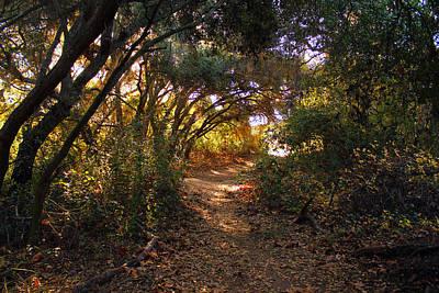 Photograph - Los Penasquitos Canyon Preserve Iv by Robin Street-Morris
