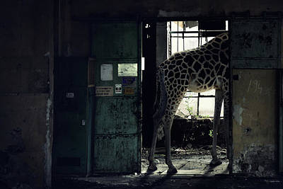 Old Abandoned Building Wall Art - Photograph - Lost Animals -  Series Nr.2 by Zoltan Toth