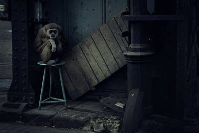 Ape Wall Art - Photograph - Lost Animals -  Series Nr.4 by Zoltan Toth